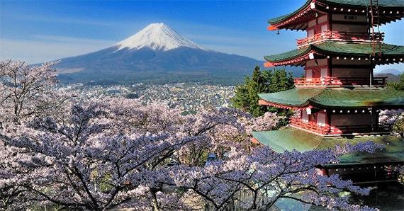 Mount Fuji Hakone Private Tour